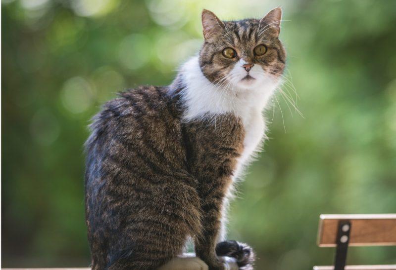 Best Cat Repellent Sprays for Furniture and Garden.
