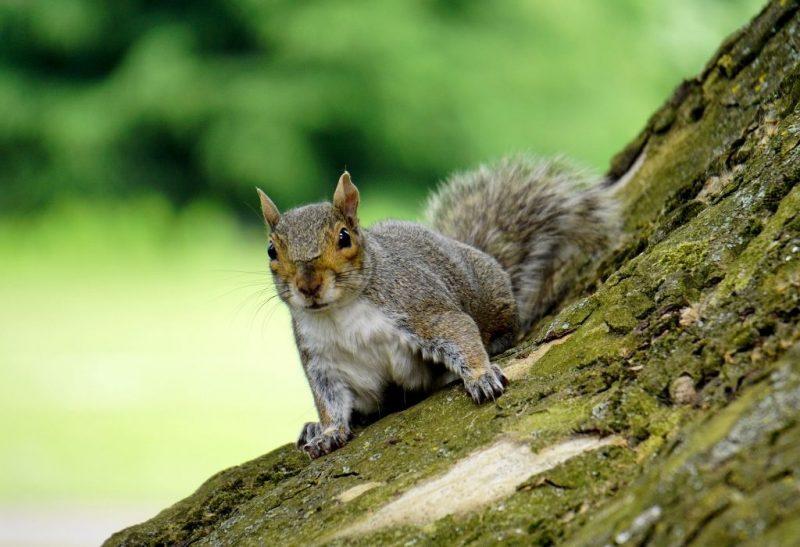 Can Squirrel Feces Make You Sick