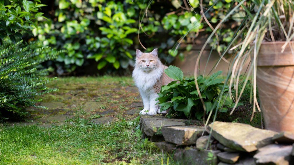 Do Cats Love Gardens