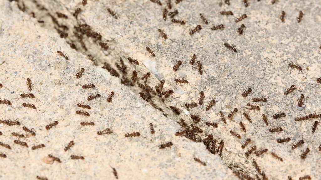 How Many Ants Does It Take To Lift a Person