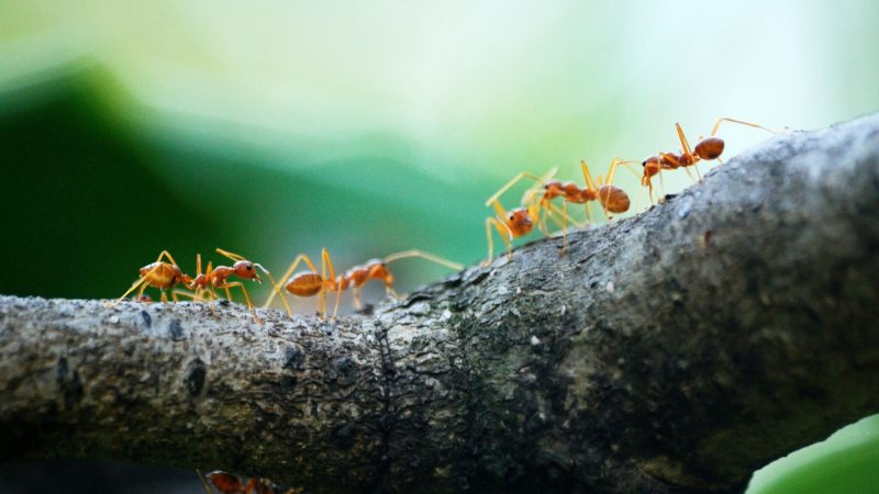 How many ants exist in the world