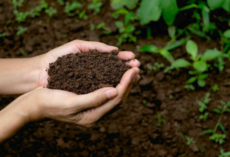 How to Get Rid of Soil Mites Naturally