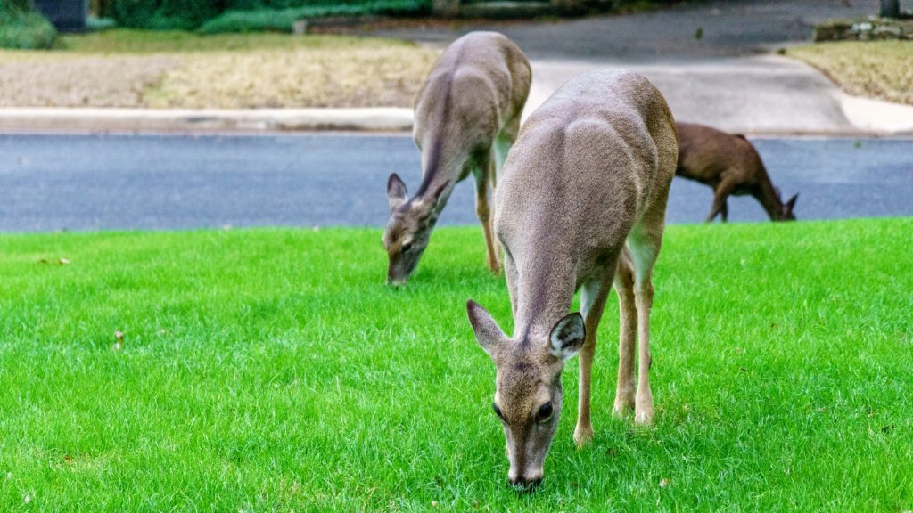 Keep Deer From Coming to Your House