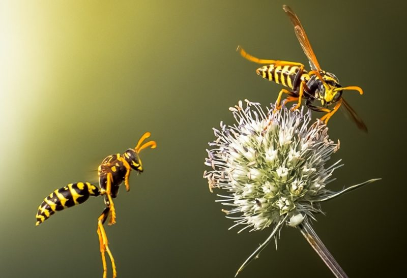 Plants That Repel Wasps