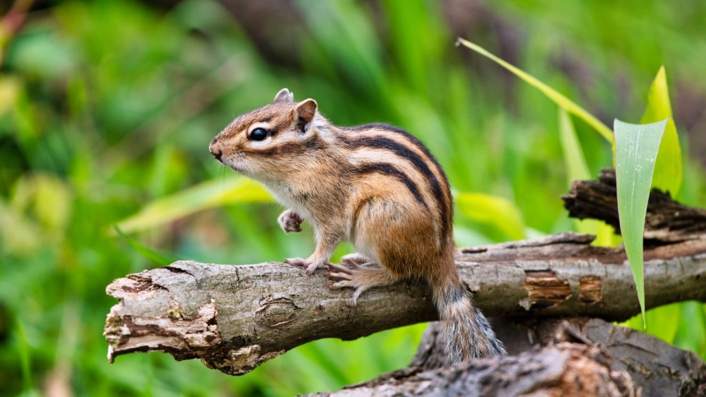 Repelling Chipmunks in Particular Areas
