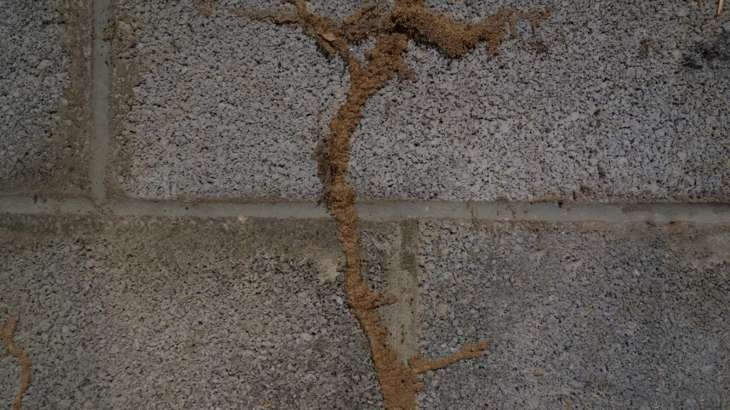 What Are Signs of Subterranean Termites