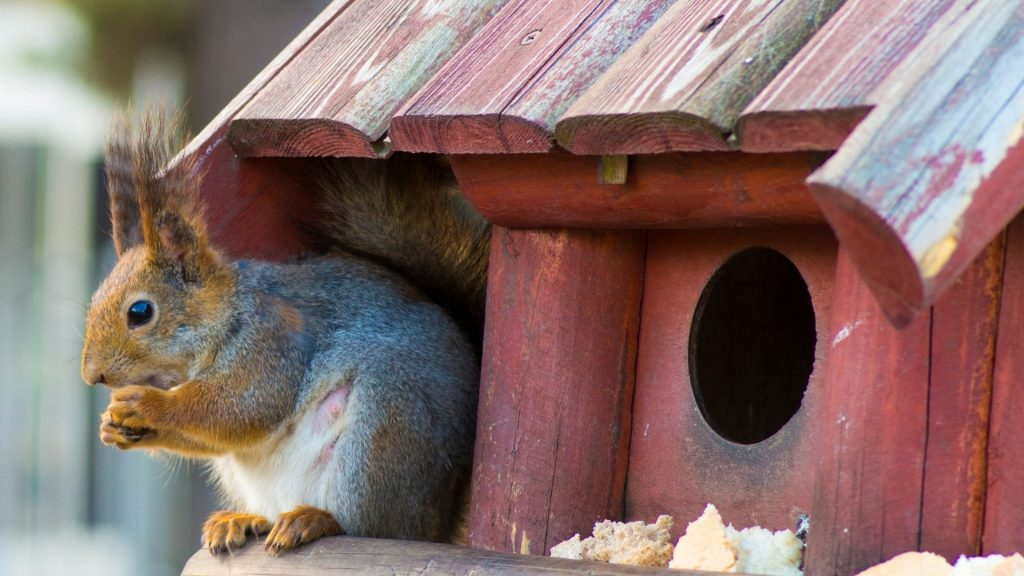 What Do Pet Squirrels Eat
