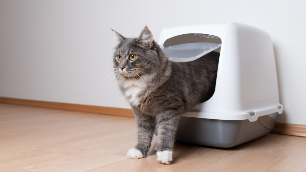 Your cat has problems with the litter box