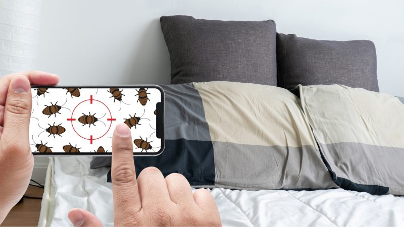 How Do I Locate Bed Bugs