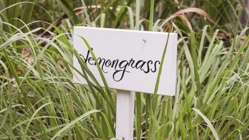 What Is Lemongrass